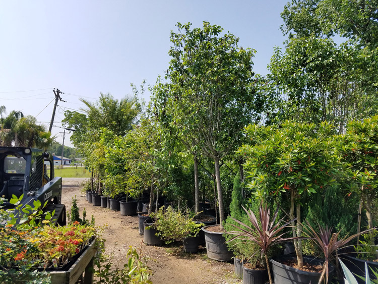 plant nursery, residential landscaping, commercial landscaping, beaumont, texas