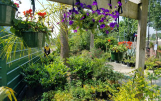 Nurseries plants trees beaumont texas
