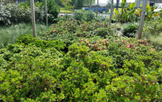 Nursery and Landscaping Beaumont Texas