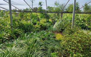 plants for sale beaumont, texas