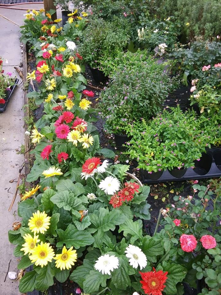 Plant Nursery | Trees and Shrubs for Sale Beaumont Texas